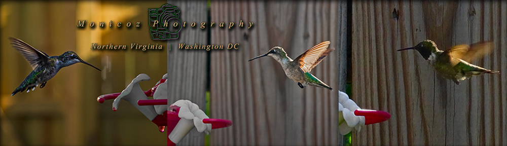hummingbird_header